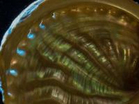 新的无损光学技术揭示了珍珠母的结构
