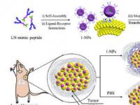 通过添加助溶剂指导多肽的自组装