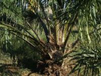 棕榈油废料可生物降解的塑料
