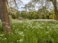 英国气象局和皇家园艺学会为园丁们提供保护植物的建议