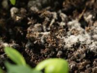 机器人土壤揭示了我们脚下的秘密微生物大都市
