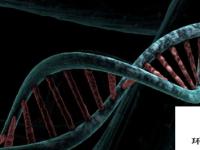 关于KLF4如何影响基因表达的新见解