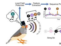将鸟类的大脑信号解码成歌曲的音节