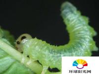 研究人员将昆虫防御化学物质转化为令人毛骨悚然的声音
