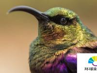 多样性很重要物种丰富度保持生态系统运行