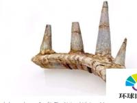奇怪的装甲尖刺属于有史以来发现的最古老的甲龙