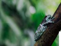 亚马逊保护区有益于人类和生物多样性