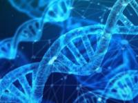 强大的新技术使科学家能够研究蛋白质如何改变细胞内的形状