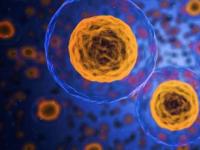 科学家开发新传感器以捕获细胞中的钙活性