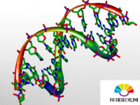 DNA缠结可以帮助预测突变的进化