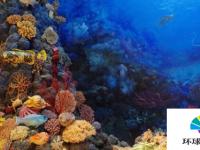 首次大规模珊瑚耐热性普查发表