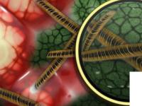 机器学习预测抗生素耐药性传播