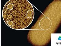 有史以来最清晰的图像揭示了活细菌的斑驳面孔